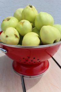 van H acres - transparent apples, organic eggs